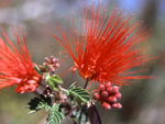 Desert Flowers of the SW US - Enjoy the splendor and diversity of the desert.