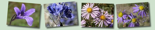 Blue and Purple Wildflowers Banner