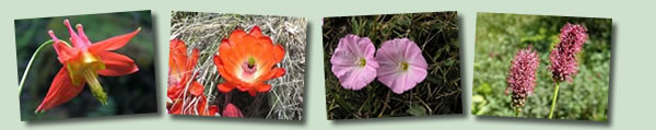 Red, Pink and Orange Wildflowers Banner