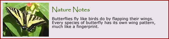 Click here to learn more about butterflies