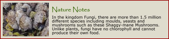 Click here to learn more about fungi