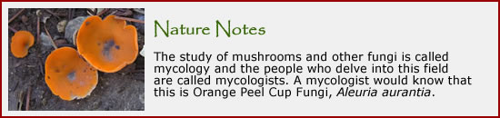 Click here to visit our section on fungi.