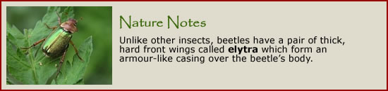 Click to learn more about bugs