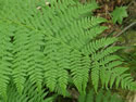 A Look at Ferns