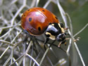 Beetles Photo Gallery
