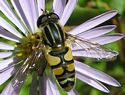 Insects Photo Gallery
